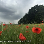 Limburg Klassen 5 Gruppe 1_49