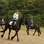 GTAB Pferde